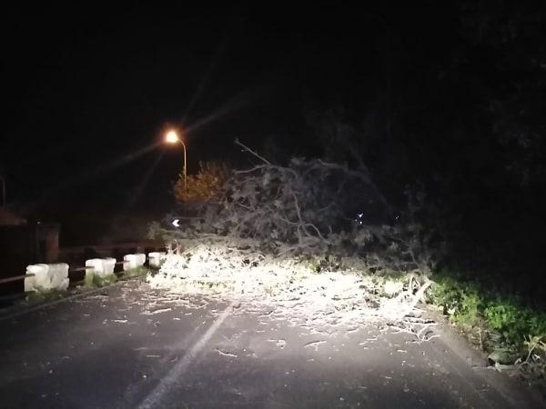 Albero cade in strada e blocca circolazione a Maina